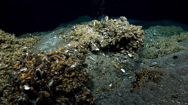 mussels-hires (1).jpg