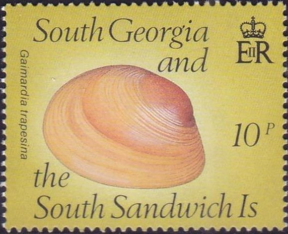 shell-gaimardia-trapesina