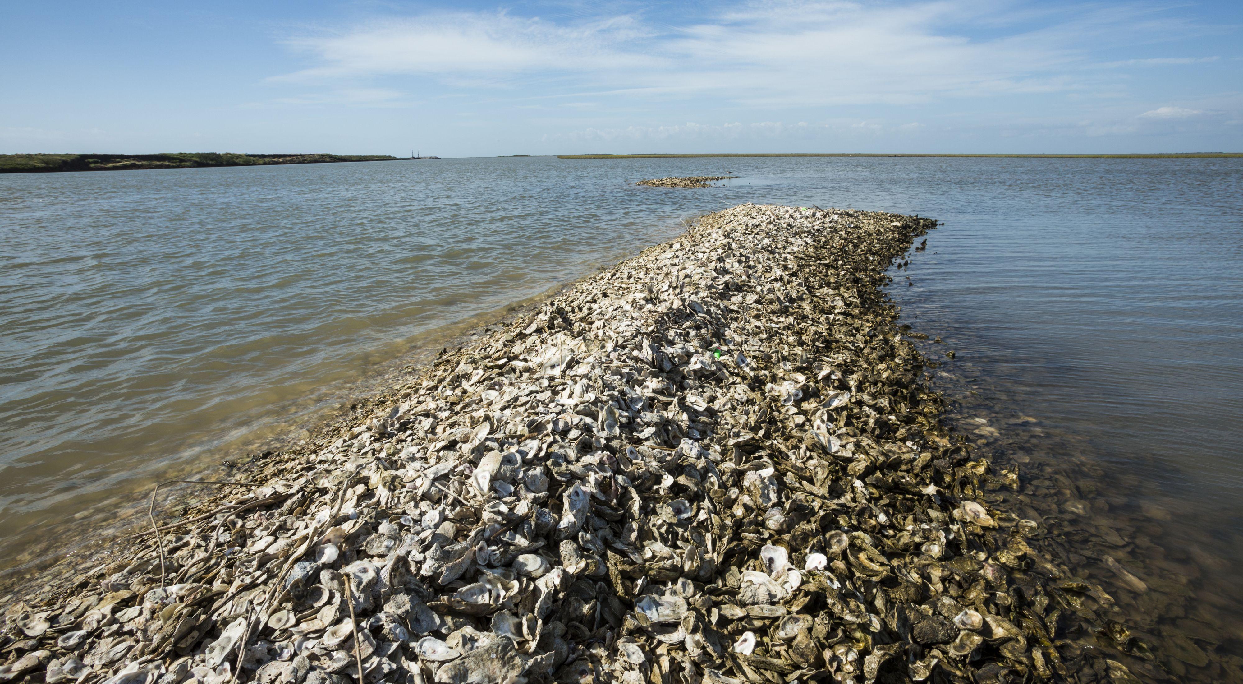 Oystershells.jpg