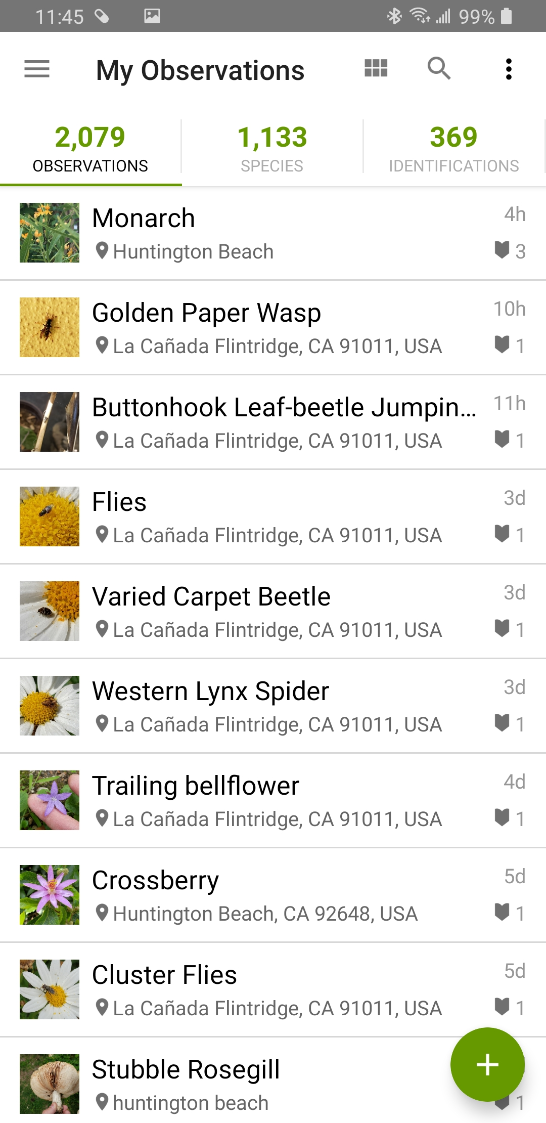 Screenshot_20200424-234523_iNaturalist.jpg